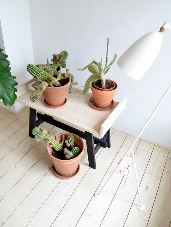 decorating interiors with cactus3
