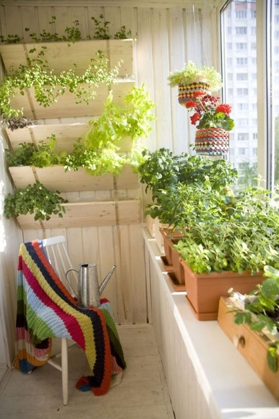 Herbs of spring for balcony15