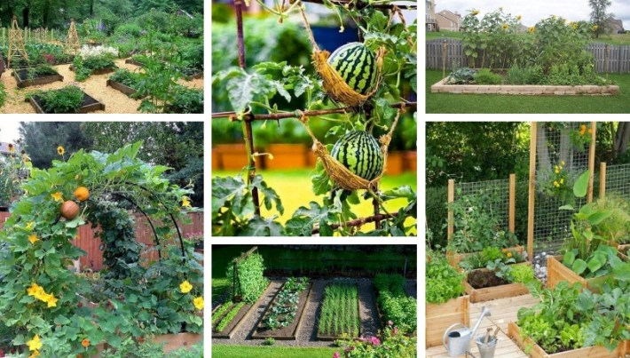 45 Affordable DIY Design Ideas For A Vegetable Garden | My Desired Home