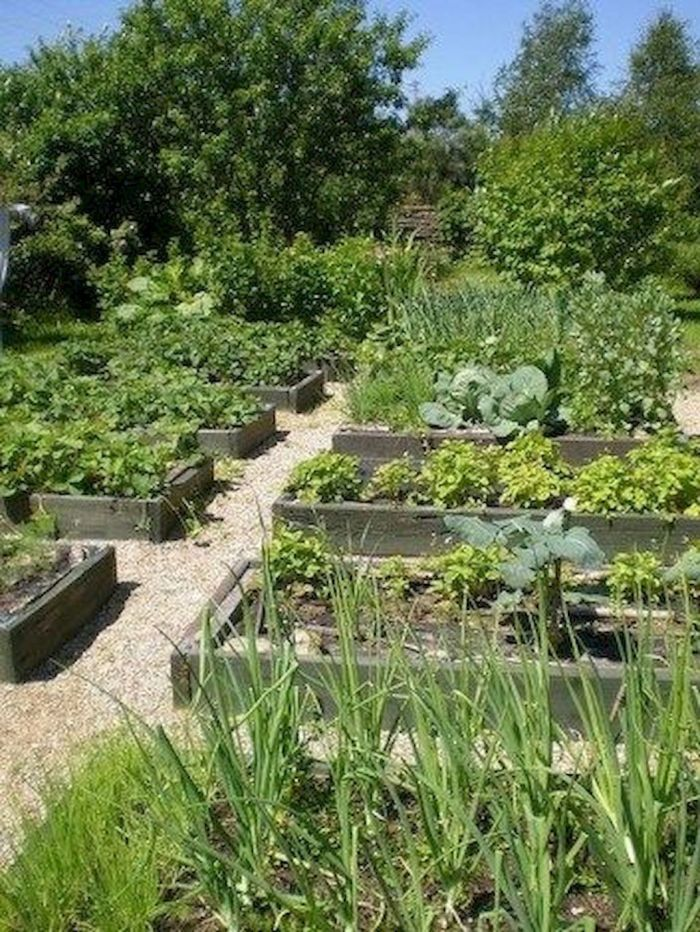 45 Affordable Diy Design Ideas For A Vegetable Garden My Desired Home