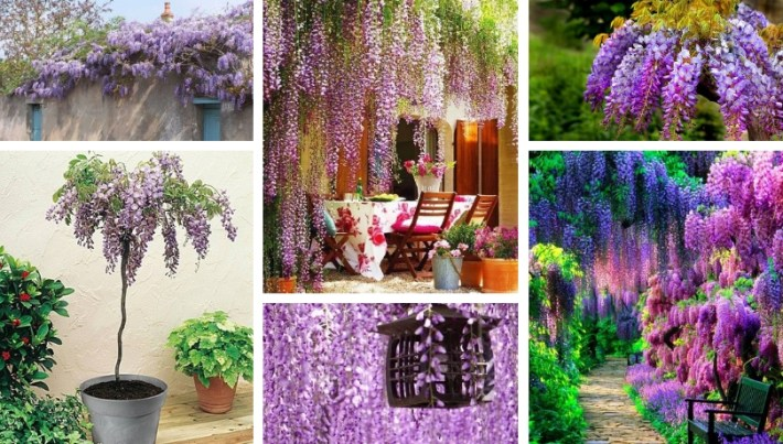 Wisteria A Rainbow Waterfall Of Bright Colors And Flowers In