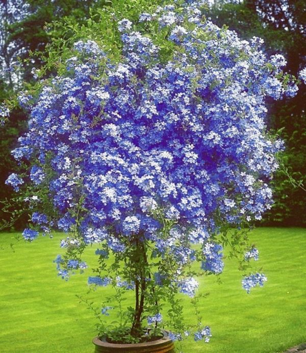 The Most Beautiful Trees For A Truly Spectacular Yard And Garden My Desired Home