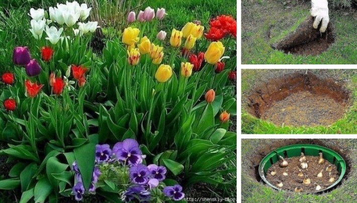 How to make an original DIY flowerbed for tulips