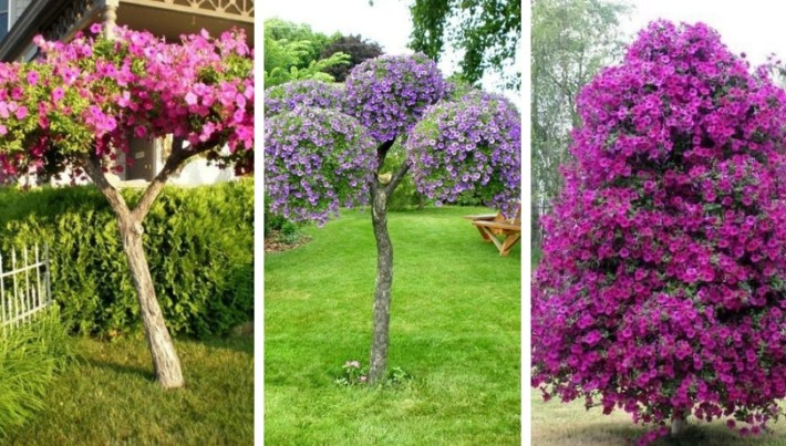 Not just petunia, but a whole tree – Beautiful design ideas for your garden