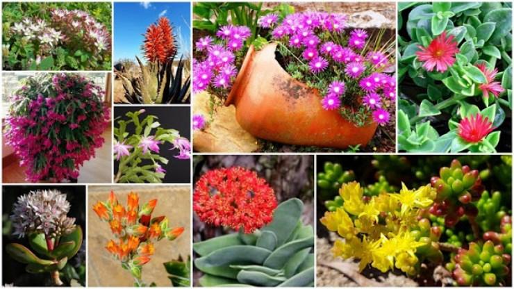 8 Amazing succulents with impressive flowers