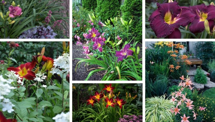Beautiful and undemanding garden design ideas with daylilies