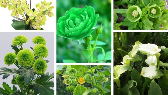 Most beautiful green flowers for a great yard or garden