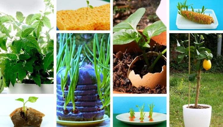 Super Simple Home Gardening Hacks – When No Garden is Necessary – How To Grow Fruit & Vegetables At Home
