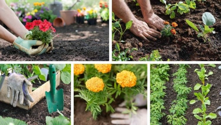 April, work in the garden – all you need to know for a great vegetable and flower garden