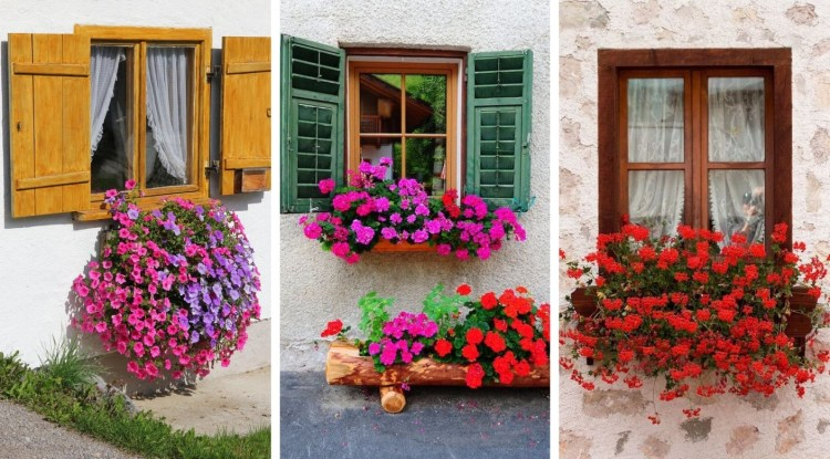 Absolutely gorgeous beautiful windows with colorful, magical flowers
