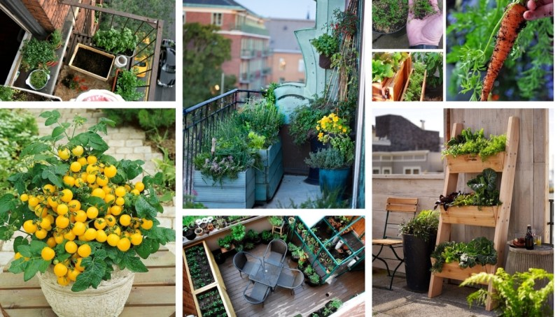 Balcony or terrace vegetable garden – the ideal solution for cultivating your mini garden in the city