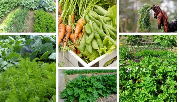 Benefits of Organic Gardening and Top Tips