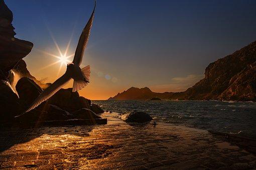 海岸の鳥と太陽
