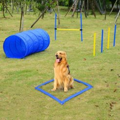 Beginners Dog Agility Equipment