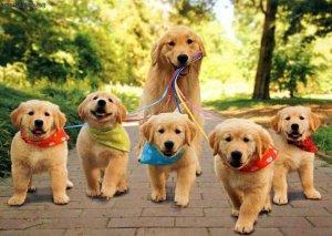 Mastering Dog Walking Doggie Style