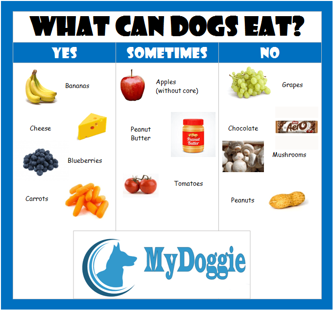 What Can Dogs Eat ?