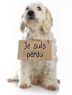 chien_perdu