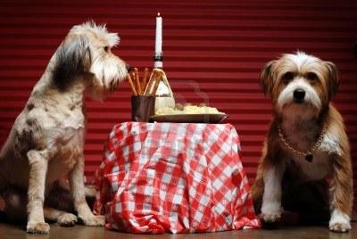 2578065-deux-chiens-ayant-diner-aux-chandelles