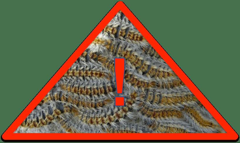 danger chenille.png
