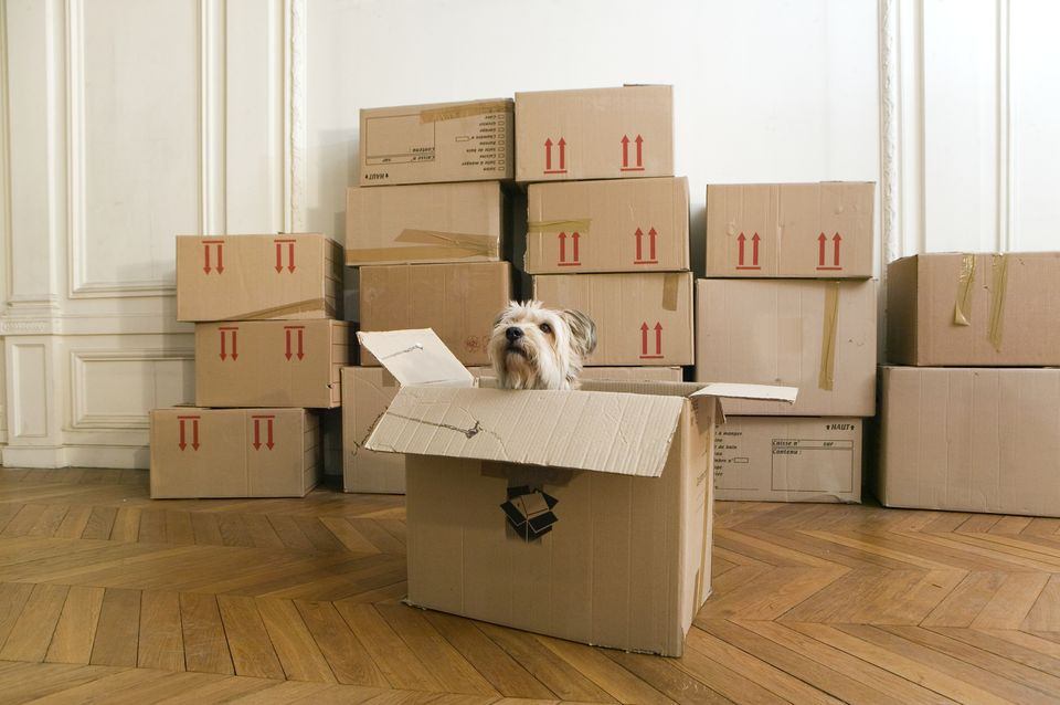 moving_dog75393958-590878c73df78c928301d41d