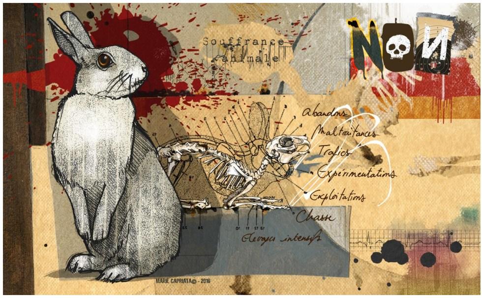 couverture non souffrance animale.jpg