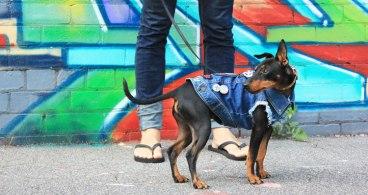 Pethaus-Raw-Denim-Dog-Jacket-750