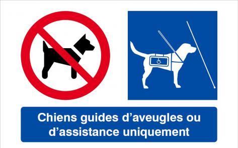 chien_guide_handi.jpg