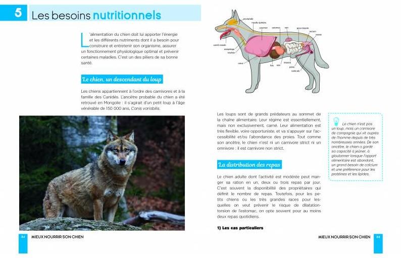 mieux-nourrir-son-chien (1).jpg