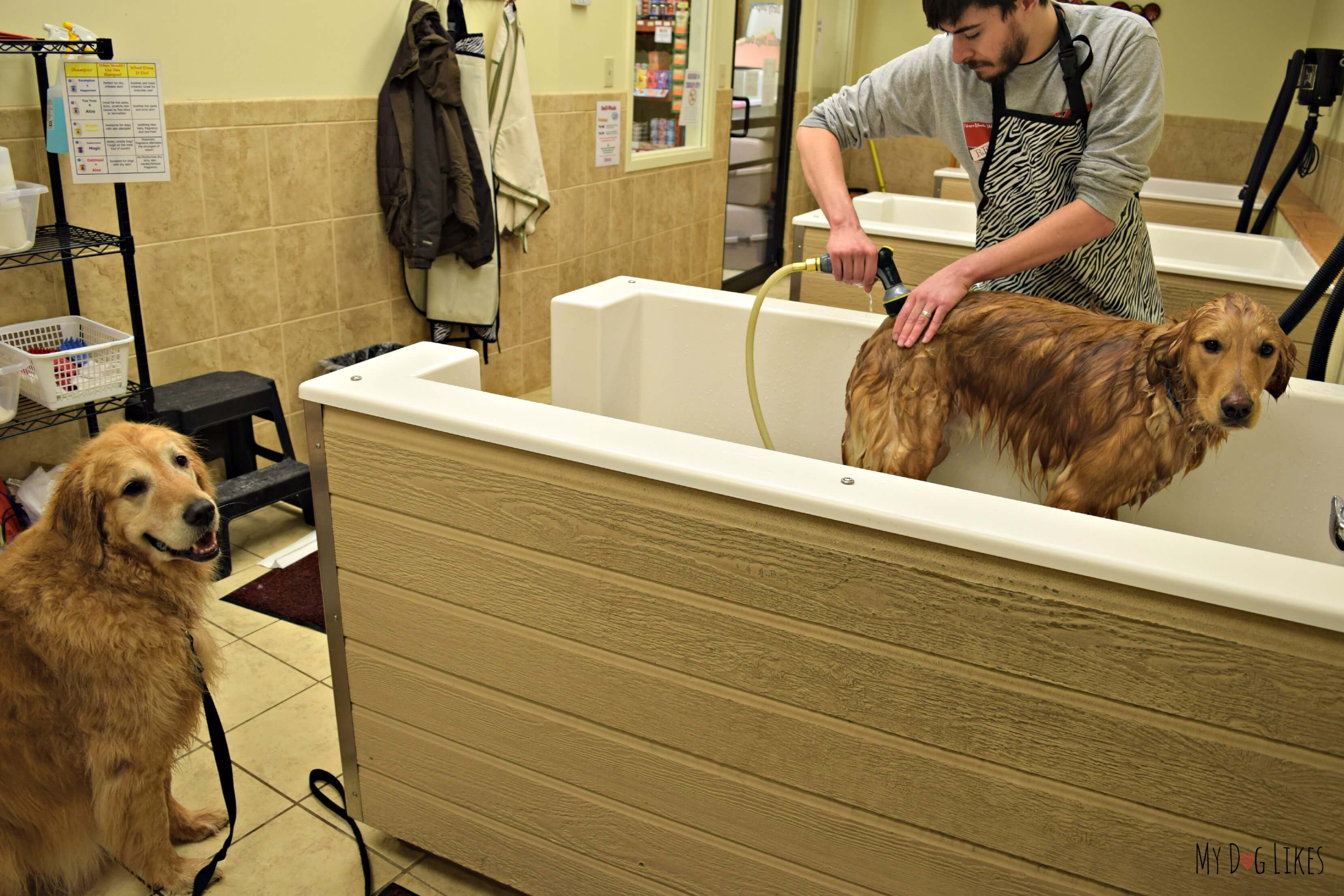 Self wash petsaver healthy pet superstore giving the boys a bath at the self service dog grooming stations at petsaver superstore solutioingenieria Image collections