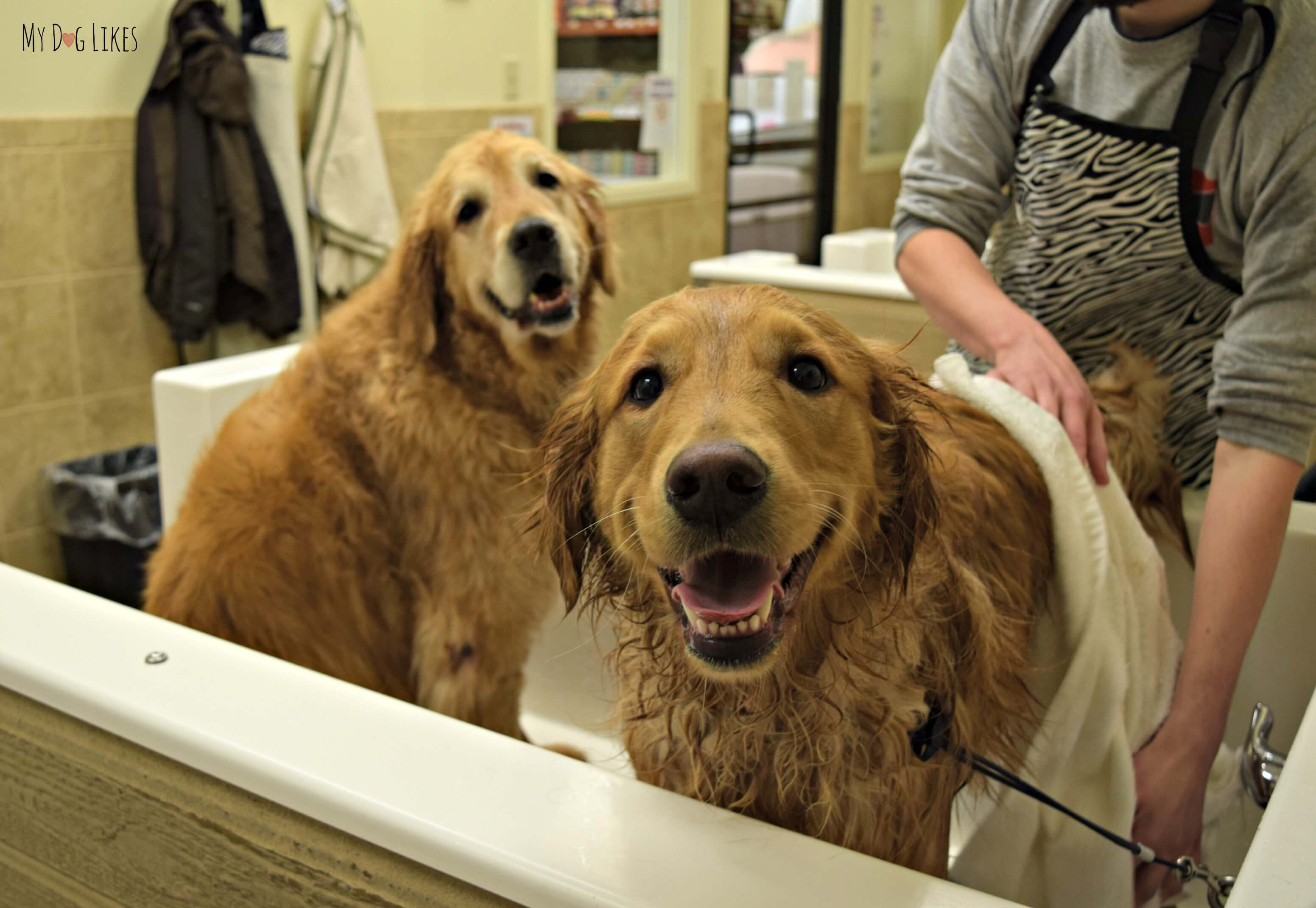 Self wash petsaver healthy pet superstore harley jumped into the dog bath tub while we were giving charlie a bath solutioingenieria Gallery