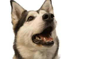 dog dental care Rabies Vaccine For Dogs?