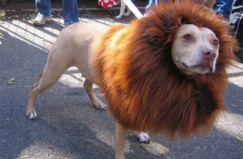 """YLgWK Essex Lion """"Probably a Pit Bull"""""""
