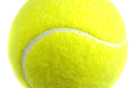 tennisball The Best Dog Training Equipment in the World?