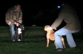 yau3g Brothers Jailed For Dog Fighting in Landmark Scottish Cruelty Case
