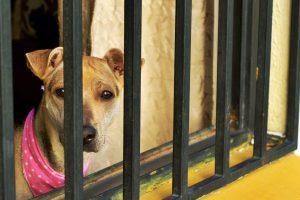 Puppy Farm Support