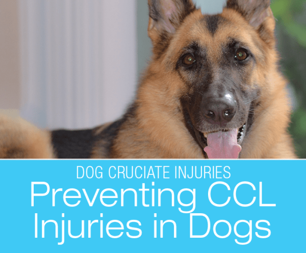 Preventing ACL/CCL Injuries In Dogs