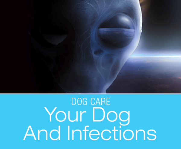 Your Dog And Infections: Alien Invasion