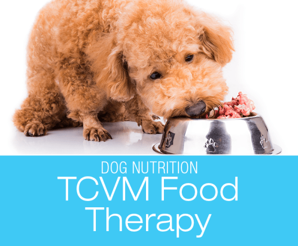 TCVM Food Therapy: Healing Your Dog With Food—More To Food Than Nutritional Value?