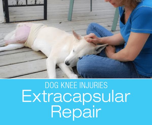 Canine Extracapsular Repair: Sandy's Extracapsular Repair