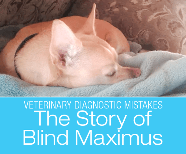 Veterinary Diagnostic Mistakes: Trust Your Gut! The Story Of Blind Maximus