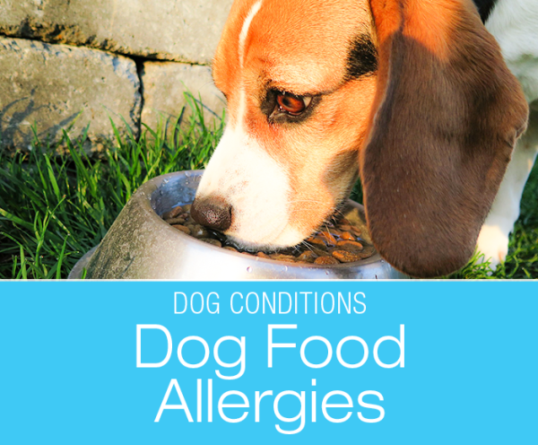 Food Allergies in Dogs: Allergies Are Not the Same as Food Intolerance