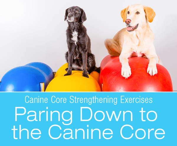 Canine Core Strengthening Exercises: Paring Down to the Canine Core