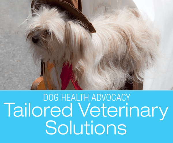 Tailored Veterinary Solutions: Thinking Outside The Box