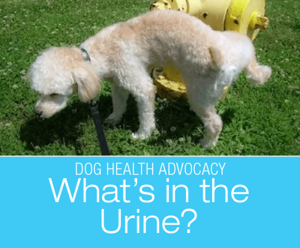 Examine Your Dogs Pee: What's In The Urine? What You Can Notice On Your Own