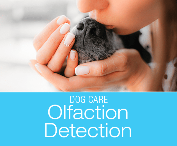 Olfaction for Dog Diagnosis: Smellognostics—More On What The Nose Knows