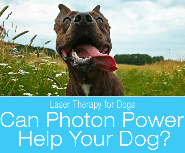 Laser Therapy for Dogs: Can Photon Power Help Your Dog?