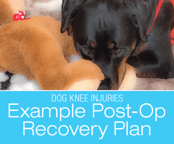 CCL Surgery Post-Op Care: Example Plan for Your Dog's Recovery after Cruciate Ligament Surgery