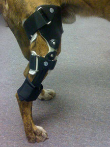 Veterinary Highlights: OrthoPets' Orthotics & Prosthetics