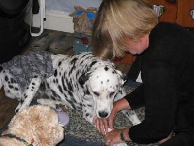 Dog therapies: Reiki
