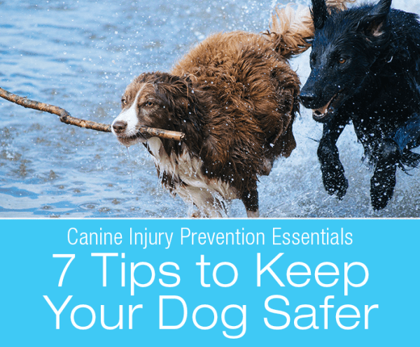 Canine Injury Prevention Essentials: 7 Tips For Keeping Your Dog Safer